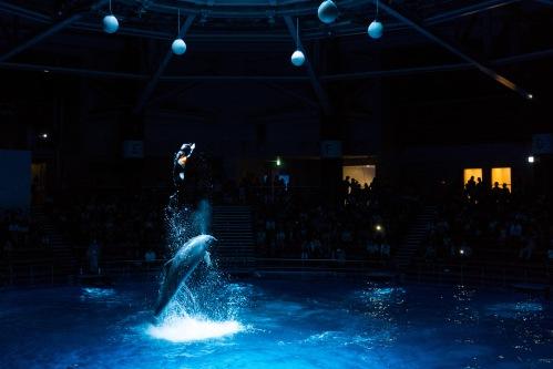 salto delfino